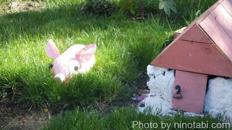 花壇の中にいた豚