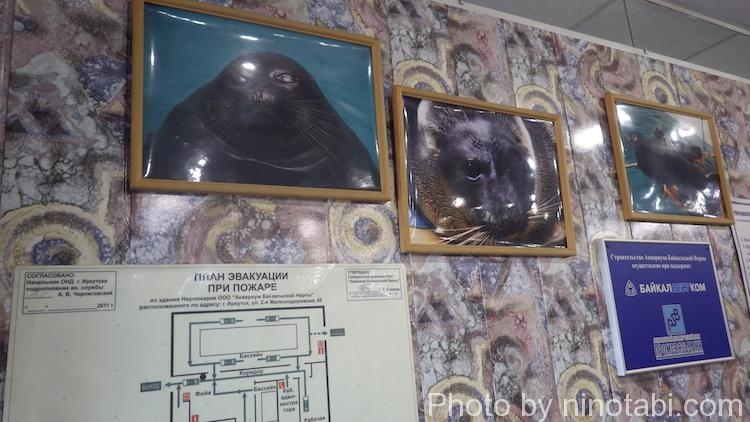 ネルパミュージアム内写真
