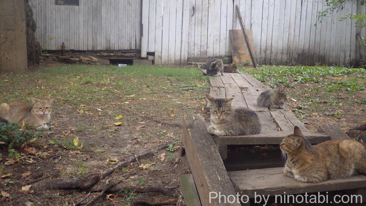 カッサの近くにいた猫たち
