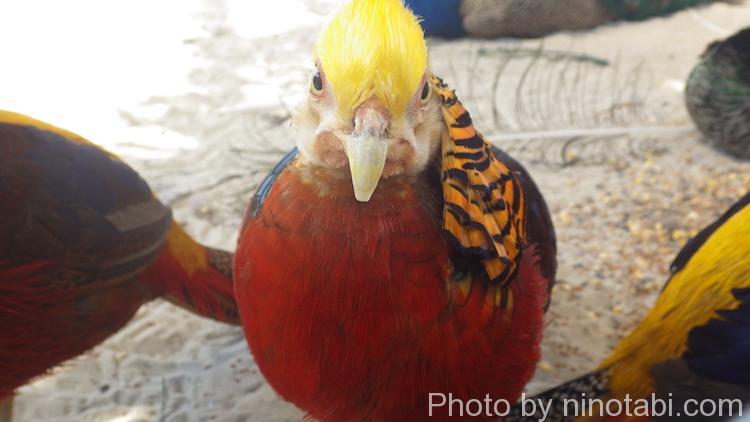 名前わからないんだけど綺麗な鳥